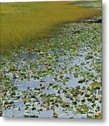 Alaska - Lily Pond And Marshy Meadow Metal Print