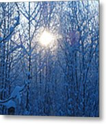Alaska Sunrise Illuminating Through Birches And Willows Metal Print
