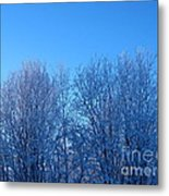 Alaska Sunrise Lighting Willows In Winter Metal Print