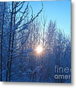 Alaska Sunrise Shining Through Birches And Willows Metal Print