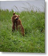 Alaska2010.-brown Beers On The Kenai Metal Print