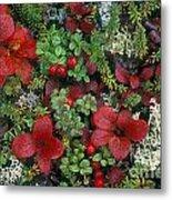 Alaskan Berries 1 Metal Print