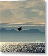 Alaskan Eagle At Sunset Metal Print