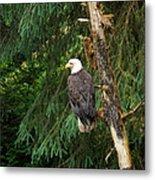 Alaskan Eagle Metal Print