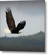 Alaskan Flight Metal Print