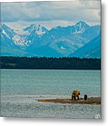 Alaskan Grizzly And Spring Cub Metal Print