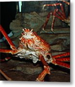 Alaskan King Crab 5d24125 Metal Print by Wingsdomain Art and Photography