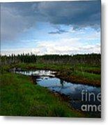 Alaskan Moose 3 Metal Print