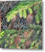 Alaskan Wild Cat Metal Print