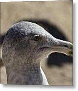 Albatross- Hawaii Metal Print