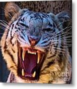 Albino Fangs Metal Print