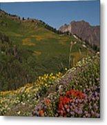 Albion Basin Summer Metal Print