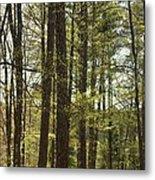 Aldridge Lake Trail Metal Print
