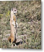 Alert Yellow Mongoose Metal Print