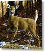 Whitetail Deer - Alerted Metal Print by Crista Forest