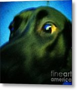 Alex Has A Dog Metal Print by Jackie Bodnar