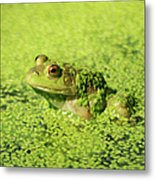 Algae Covered Frog Metal Print