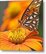 All About Orange 3236 3 Metal Print