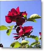All About Roses And Blue Skies Iv Metal Print