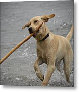 All About The Stick Metal Print by Loree Johnson