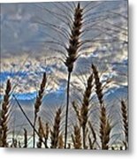 All About Wheat Metal Print