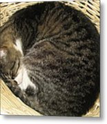 All Curled Up Metal Print
