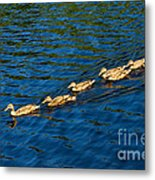 All Ducks Lined Up Metal Print