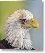 All Feathers And Additude Metal Print