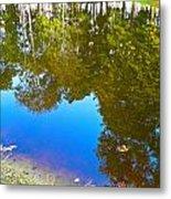 All Pond Treeflection Metal Print