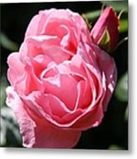 All Shades Of Pink Metal Print