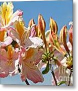 All Stages Of Bloom Metal Print