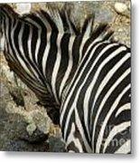 All Stripes Zebra 3 Metal Print