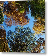 All The Trees Of The Forest Metal Print
