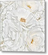 All The White Roses  Metal Print