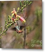Allen Hummingbird In Flight Metal Print
