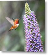 Allen Hummingbird On Flower Metal Print