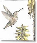 Allen's Hummingbird And Aloe Metal Print
