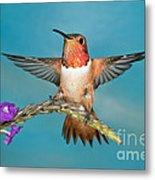 Allens Hummingbird Male Metal Print