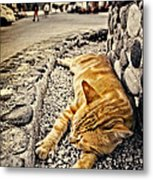 Alley Cat Siesta In Grunge Metal Print by Meirion Matthias