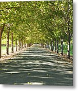 Alley Of Trees On A Summer Day Metal Print