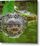 Alligator 2 Metal Print