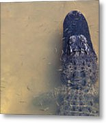 Alligator And Fishes Metal Print