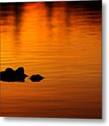 Alligator Dusk Metal Print