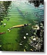 Alligator Gar Metal Print