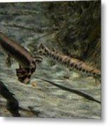 Alligator Gars Metal Print