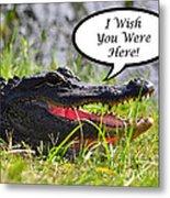 Alligator Greeting Card Metal Print