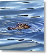 Alligator In Blue Metal Print