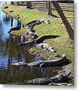 Alligators Beach Metal Print