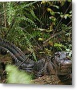 Alligator's Life Metal Print