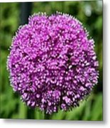 Allium Globe Metal Print